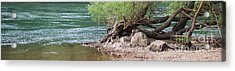 The Tangled Tree Acrylic Print by Julie Clements