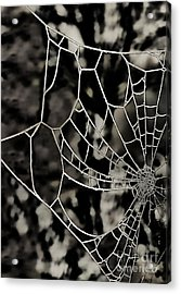 The Tangled Web Acrylic Print by Sheila Laurens
