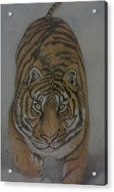 The Tiger Acrylic Print by Christy Saunders Church