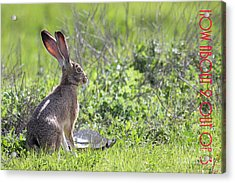 The Tortoise And The Hare How About Two Out Of Three 40d12379 Acrylic Print by Wingsdomain Art and Photography
