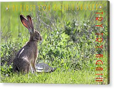 The Tortoise And The Hare Try Try Again 40d12379 Acrylic Print by Wingsdomain Art and Photography