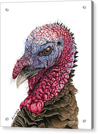 The Turkey Acrylic Print by Sarah Batalka