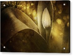 The Unveiling 2 Acrylic Print by Scott Norris