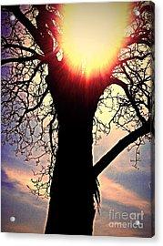 The Walnut Tree Acrylic Print by Garren Zanker