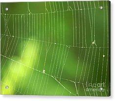The Web Acrylic Print by Roman Milert