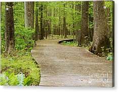 The Wooden Path Acrylic Print by Patrick Shupert