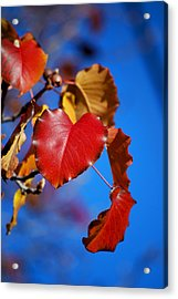 #theheartofthematter Acrylic Print by Becky Furgason