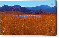 There's A Lake Over There Acrylic Print by Feva  Fotos