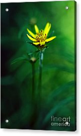 There's A Secret World Acrylic Print by Lois Bryan