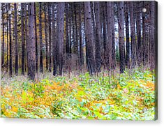 There's More To The Understory Acrylic Print by Mary Amerman