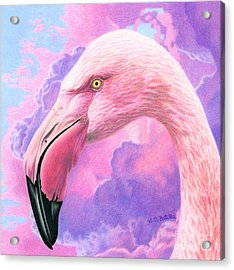 Think Pink Flamingo Acrylic Print by Sarah Batalka