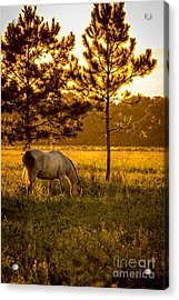 This Old Friend Acrylic Print by Marvin Spates