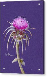Thistle Acrylic Print by Diane Cutter