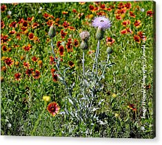 Thistle Bee Wildflowers Acrylic Print by ARTography by Pamela Smale Williams