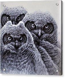 Three Amigos Acrylic Print by Rick Hansen