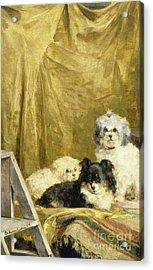 Three Dogs Acrylic Print by Charles van den Eycken