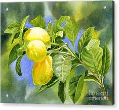 Three Lemons Acrylic Print by Sharon Freeman