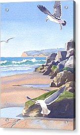 Three Seagulls At Coronado Beach Acrylic Print by Mary Helmreich