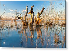 Three Sisters Acrylic Print by Bill  Robinson