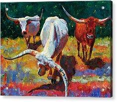 Three Texas Longhorns Acrylic Print by Debra Hurd