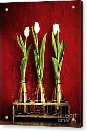 Three White Tulips Floral Acrylic Print by Edward Fielding
