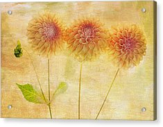 Three Yellow Dahlias Acrylic Print by Rebecca Cozart