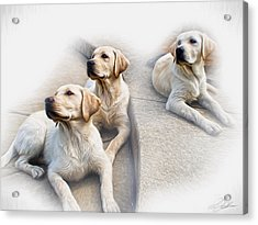 Three's Company Acrylic Print by Peter Chilelli