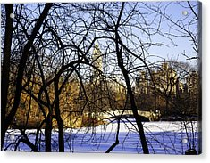 Through The Branches 3 - Central Park - Nyc Acrylic Print by Madeline Ellis
