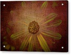 Through The Veil Acrylic Print by Steven  Taylor