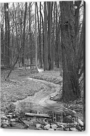 Through The Woods Acrylic Print by Sara  Raber
