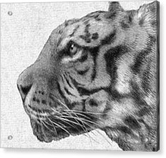 Tiger Acrylic Print by Eric Fan