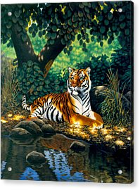 Tiger Acrylic Print by MGL Studio - Chris Hiett