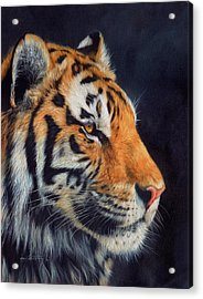 Tiger Profile Acrylic Print by David Stribbling