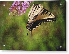 Tiger Swallowtail-featured In Photography And Textures And Harmony-happiness Groups Acrylic Print by EricaMaxine  Price