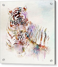 Tiger With Cub Watercolor Acrylic Print by Marian Voicu