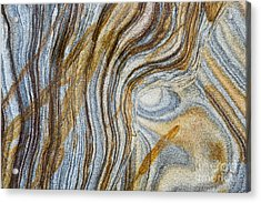 Tigers Eye Acrylic Print by Tim Gainey