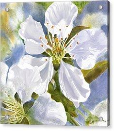 Time To Blossom Acrylic Print by Joan A Hamilton