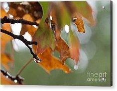 Tiny Leaf Acrylic Print by Barbara Shallue