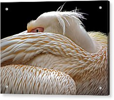 To Be Half Asleep... Acrylic Print by Thierry Dufour