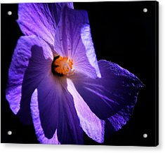 Todays'  Blessing Acrylic Print by Camille Lopez