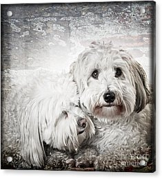 Together Acrylic Print by Elena Elisseeva