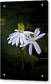 Togetherness Acrylic Print by Holly Kempe