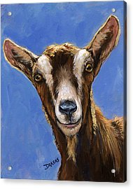 Toggenburg Goat On Blue Acrylic Print by Dottie Dracos