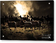 Tomales Bay Harem Under The Midnight Moon - 7d21241 - Sepia Acrylic Print by Wingsdomain Art and Photography