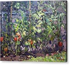 Tomatoes In Viola's Garden  Acrylic Print by Ylli Haruni