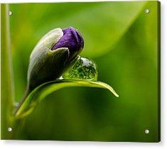 Topsy Turvy World In A Raindrop Acrylic Print by Jordan Blackstone