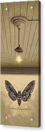 Toward The Light Acrylic Print by Ron Crabb