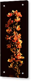 Tower Bloom Acrylic Print by Leif Sohlman