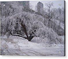 Tracks By A Tree Acrylic Print by Anastasia Konn