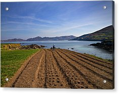 Traditional Poato Farming ,near Dursey Acrylic Print by Panoramic Images